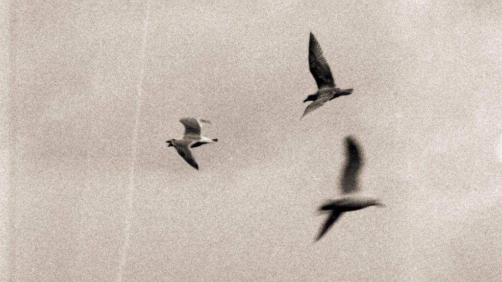 An film photograph of birds flying The negative had a major scratch on the left-hand side.